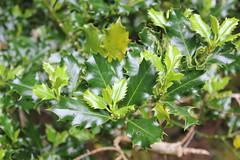 IMG_3202 (avsfan1321) Tags: connemaranationalpark connemara nationalpark ireland countygalway green lush landscape plants
