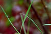 rain (nelesch14) Tags: fall autumn macro drop raindrop bokeh nature blur grass leaves meadow