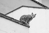 cat in geometry (FraVal Imaging) Tags: cómpeta flickr spain bw competa street espana andalucia cat andalusien fauna blackandwhite spanien axarquia
