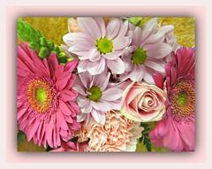Elegant Mixed Bouquet (bigbrowneyez) Tags: gorgeous beautiful flickr flickrsweet delightful lovely pretty prettyblossoms petals sweet dolce belli bellissimo fiori flowers nature natura fantastic softness pastels frame cornice eleant fancy elegant elegance precious dreamy romantic cheerful elegantmixedbouquet