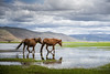 Go wild! (Nichan Naratthakit) Tags: horses horse water lake grass nature wild wildlife shangrila china chinese sky asia eastasia animal landscape run life reflection travel tourism nikon nikkor 2485mm