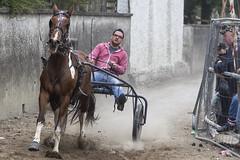 Raising dust (Frank Fullard) Tags: frankfullard fullard candid street portrait sulky sulkyracing horse fair ballinasloe duct irish ireland galway sport equine piebals pony troptter