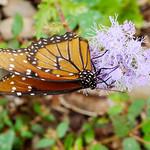 Lady Bird Johnson Wildflower Center thumbnail