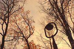 DSC_1943 (FMAG) Tags: 2017 żabieniec zalesie jesien
