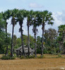 On the road for Angkor (Cambodia) (Guy World Citizen) Tags: country field house grass tree rural cambodia