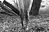 Methamorphos (SHEILA❁UVE @psychoessence) Tags: essence psychoessence methamorphos metamorphosis psychedelic dreamy girly dream trippy girl woman woods butterfly mariposa metamorfosis