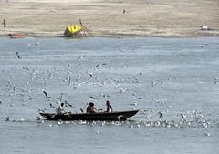 varanasi 2017 (gerben more) Tags: ganga ganges boat seagull river varanasi benares india