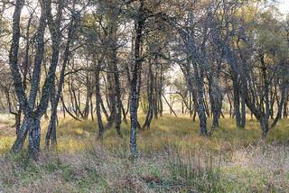 Autumn Tree Shapes