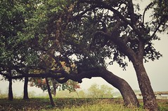 Abstract Trees (ntuquach) Tags: canon 50mm nature landscape foliage autumn country texas ingram outdoors trees