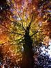 Kaleidoscope of Autumn (Creepella Gruesome) Tags: iphone6splus hipstamatic nature autumn fall tree leaves foliage colors