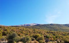 Autumn nuances (borisnaumoski) Tags: ohrid macedonia mountain galicica autumn fall trees hiking nature