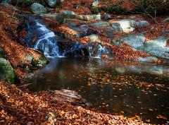 Hojas sobre el río II (candi...) Tags: hojas río agua otoño montseny rocas piedras naturaleza nature sonya77 airelibre corriente riera