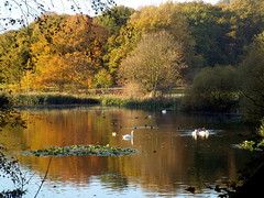 Nostell Priory, Wakefield 06.11.17 (dkmcr) Tags: daytrip travel landscape tourism scenery view visitbritain visitengland northernuk excursions 2017 water lake reflection tree autumn rustic nostellpriory wakefield yorkshire natonaltrust swan