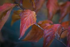 Herbstfarben (Imagery of Ancheru) Tags: colors colours farben autumn herbst ancheru bokeh 30d