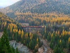 Eastbound Freight & the Fall Colors at Goat Lick (knutsonrick) Tags: bnsf bnsfrailway mariaspass trestle goatlickoverlook sheepcreektrestle glaciernationalpark montana essex essexmontana train