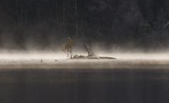 Frost I - D8G_1087 (Viggo Johansen) Tags: frost cold lake forest hoarfrost landscape sandneskommune rogaland norway dnt kyllesvatnet