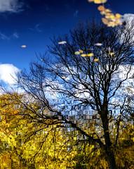 Autumnal dream (Wouter de Bruijn) Tags: fujifilm xt1 fujinonxf35mmf14r autumn autumnal autumnleaves fall reflection water tree shadow abstract nature westhove mantelingen oostkapelle walcheren zeeland nederland netherlands holland dutch outdoor bokeh waves dream