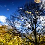 Autumnal dream thumbnail