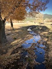 Stream in Taos (kimbar/Thanks for 3 million views!) Tags: taospueblo stream autumn tree cottonwoodtree taos newmexico