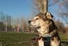 Retrato en el parque. (Photo Valdueza) Tags: mascota perro pose retrato parque mirada cielo otoño familia