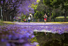 Running (maxem fotos) Tags: jacaranda jacarandá buenosaires argentina running training park parks violet trees reflections nature outdoor sport flowers