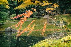 pond at Nitobe Garden (annapolis_rose) Tags: ubc universityofbritishcolumbia campus vancouver nitobegardens nitobememorialgarden japanesegarden autumn autumncolors autumnleaves pond