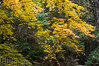 吉田郡山城の紅葉 (hs_8585) Tags: pentax k3ii da50135mmf28 hiroshima 広島 紅葉