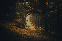 The Autumn Path (miss.interpretations) Tags: autumn path fall road sunlight dappled leaves journey forest trees colorado mist adventure rachelbrokawphotography inspiration naturem outdoors mountains traveling