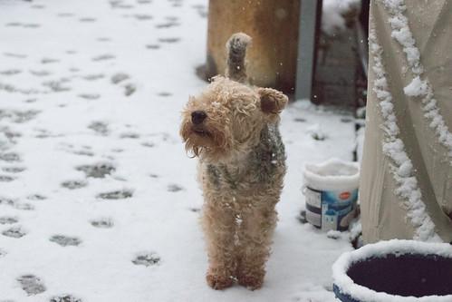 Das erste Winterweiß