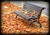 Otoño en Inca (mike828 - Miguel Duran) Tags: otoño autumn frio cold hojas bench leaf banco street calle inca mallorca majorca sony rx100 m4 mk4 iv