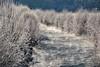 A very frosty morning (echumachenco) Tags: frost river water vapor steam bush plant cold winter december nature outdoor gosau salzkammergut upperaustria oberösterreich austria österreich nikond3100 morning house building