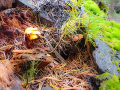 Stump (ex_magician) Tags: stump macro mushrooms moss trail forest highlakestrail klamathfalls oregon moik photo photos picture pictures image interesting lightroom adobe adobelightroom lakeofthewoods fishlake