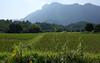 DSC01026 (Dirk Rosseel) Tags: vangvieng landscpe rice field karst mountains laos ngc