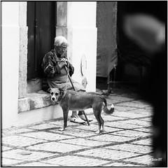 Dog and woman_Hasselblad (ksadjina) Tags: 6x6 carlzeisssonnar150mmf14 coimbra fujiacros100 hasselblad500cm nikonsupercoolscan9000ed october2017 portugal rodinal analog blackwhite dog film scan