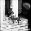 Dog and woman_Hasselblad (ksadjina) Tags: 6x6 carlzeisssonnar150mmf14 coimbra fujiacros100 hasselblad500cm nikonsupercoolscan9000ed october2017 portugal rodinal analog blackwhite dog film scan