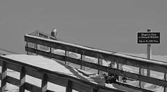 Do not Disturb (slsjourneys) Tags: snowyowl beach blackwhite abstract