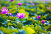 memories (D.Kafka) Tags: leica m8 digital retouch summarex 8515 memory memories color bokeh leitz