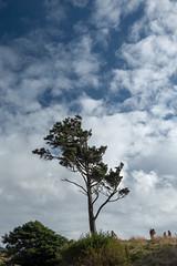 Ecola State Park, Oregon, USA (takasphoto.com) Tags: apsc america cannonbeach eeuu ecola ecolastatepark estadosunidos fotografíadepaisaje fuji fujixt1 fujixt1fujifilm fujifilm fujinon fujinonlensxf18135mmf3556rlmoiswr fujinonxf18135mmf3556rlmoiswr landscape landscapephotography landschaftsfotografie lens mar mare mer mirrorless mirrorlesscamera nature noroestepacífico noroestedelpacífico northamerica or ocean oceansea oceano oregon outdoor pnw pacificnorthwest pacificocean paisaje pazifischernordwesten photography rock rocks rockymountains sea seascape statepark tillamookhead tillamookrocklighthouse travel travelphotography traveling travels usa unitedstates unitedstatesofamerica viaje water westcoast wybrzeżepółnocnozachodnie xmount xt1 xtranscmosii xtransii xf18135 пацифичкисеверозапад アメリカ合衆国 フジノン フジフィルム ミラーレス 北米 太平洋岸北西部 海