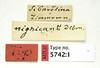 Ammophila nigricans Dahlbom, 1843 (Biological Museum, Lund University: Entomology) Tags: hymenoptera dahlbom sphecidae ammophila nigricans mzlutype05742