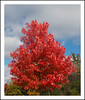 Red is the Best Color of Autumn (sjb4photos) Tags: michigan ypsilanti washtenawcounty autumn