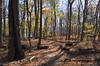 045 Huylers Landing Trail (Felton Davis) Tags: palisades njpalisades huylerslandingtrail thelongpath georgewashingtonbridge