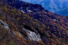 Blue Ridge Mountains, Appalachian Mountain range, North Carolina, USA (Jorge Marco Molina) Tags: blueridgemountains northcarolina appalachianmountains highelevation blueridgeparkway park statepark fallcolors mountain rollinghills