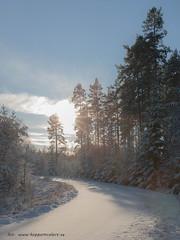 20171119003868 (koppomcolors) Tags: koppomcolors koppom värmland varmland sweden sverige scandinavia snö snow forest skog winter vinter