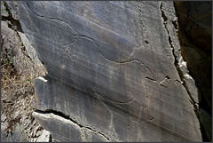 Kaksin kaunihimpi - Together (Janne Maikkula) Tags: hevonen horse petroglyph petoglyfi carving kaiverreus kallio culture kulttuuri vilanovadefozcóa portugal esihistoria art taide shamanismi shamanism samanismi kivi stone rock myöhäispaeoliittinen paeoliittinen paeoliittinenkausi