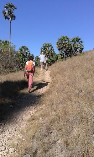 Trekking Rinca island
