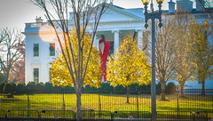 2017.12.01 Red Ribbon at the White House, World AIDS Day, Washington, DC USA 1121