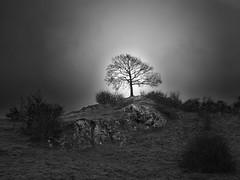 Tree in light #2 (Thunderbird61) Tags: tree light landscape solitaire bw blackandwhite blackwhite zw zwartwit schwarzweiss sw neroyböanco nb noireblanche winter mediumformat pentax pentaxart pentax645z monochrome silence