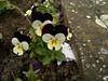 2017-09-19-11734 (vale 83) Tags: flowers nokia n8 friends