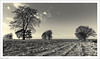 Winter Trees 349/365 (John Penberthy LRPS) Tags: 15dec17 365the2017edition 3652017 d750 day349365 johnpenberthy nikon northdownsway surrey winter farmland trees