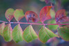 IMGP5314 (jamin.sandler) Tags: pentaxistds smcpentaxa50mmf28macro